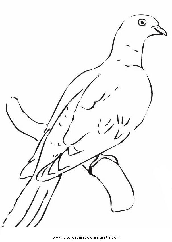 animales/pajaros/paloma_palomas_5.JPG
