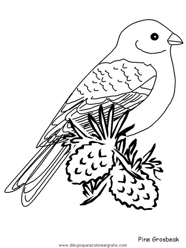 animales/pajaros/pinegrosbeak.JPG