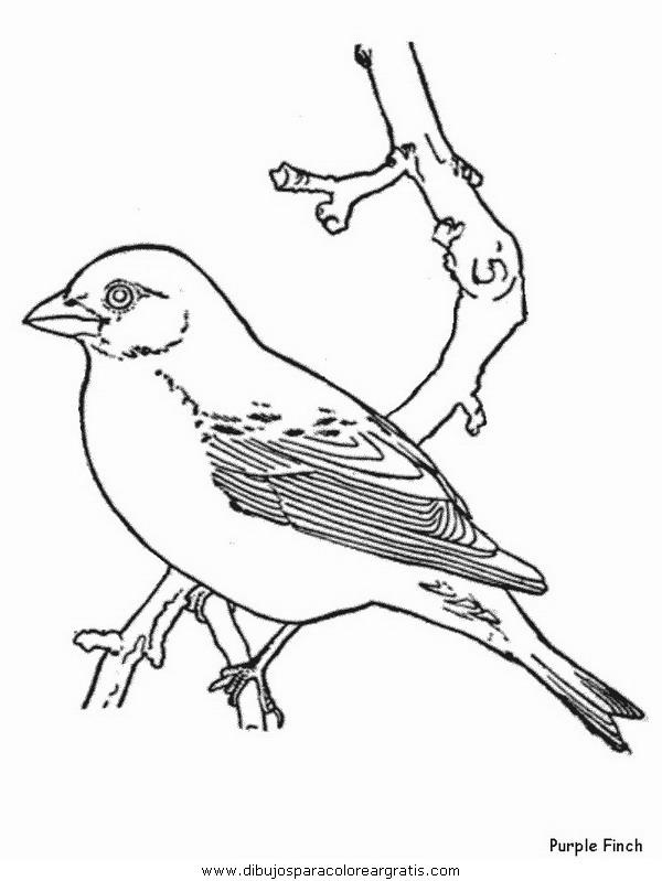 animales/pajaros/purplefinch.JPG