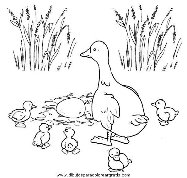 animales/pajaros/uccelli_005.JPG
