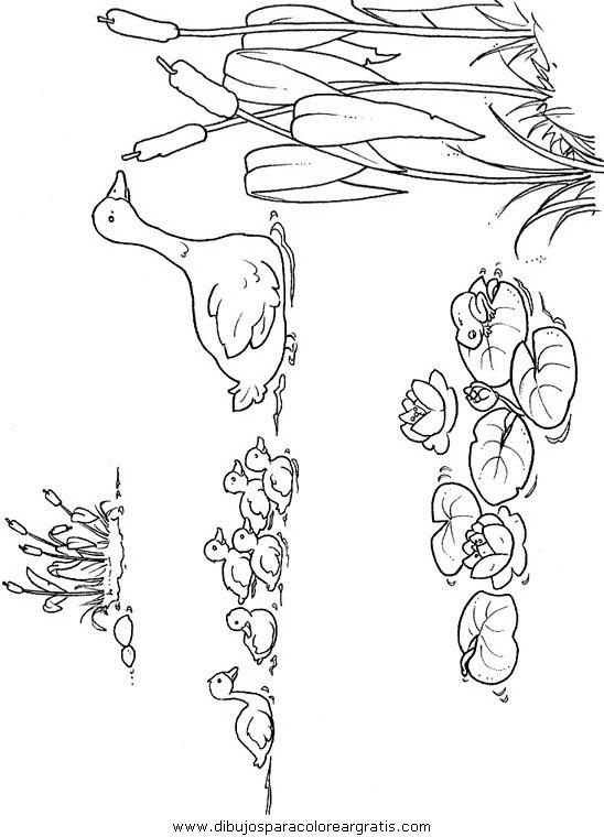 animales/pajaros/uccelli_006.JPG