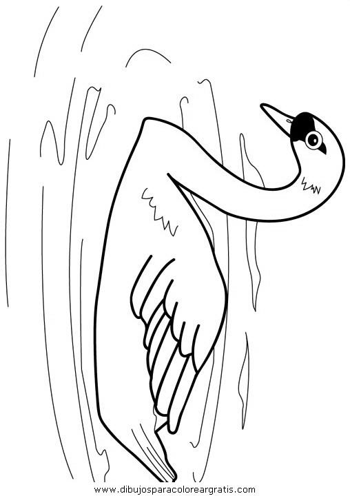 animales/pajaros/uccelli_012.JPG