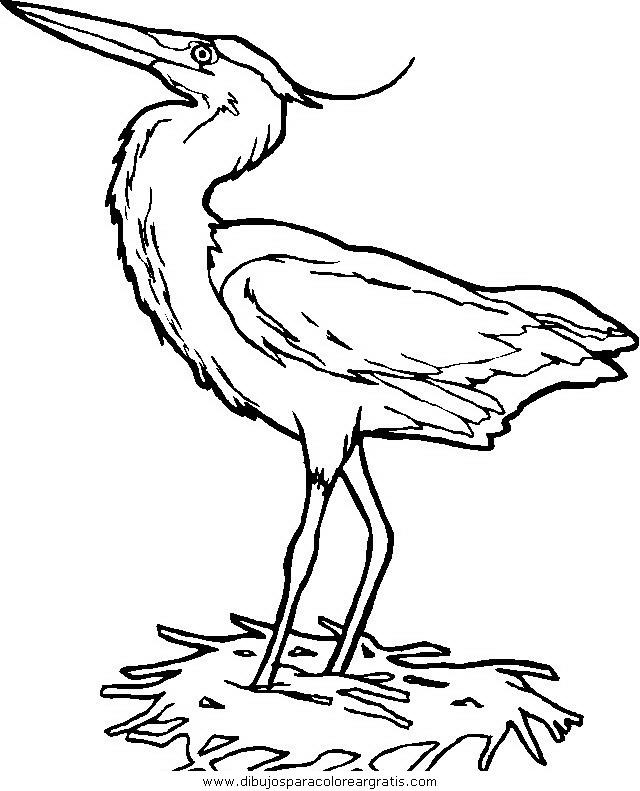 animales/pajaros/uccelli_015.JPG