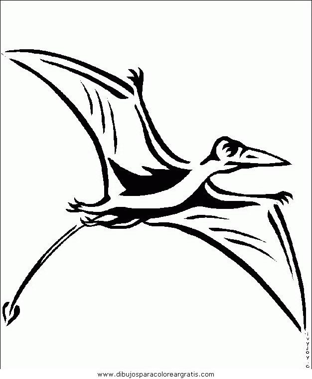 animales/pajaros/uccelli_016.JPG