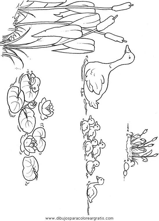 animales/pajaros/uccelli_028.JPG