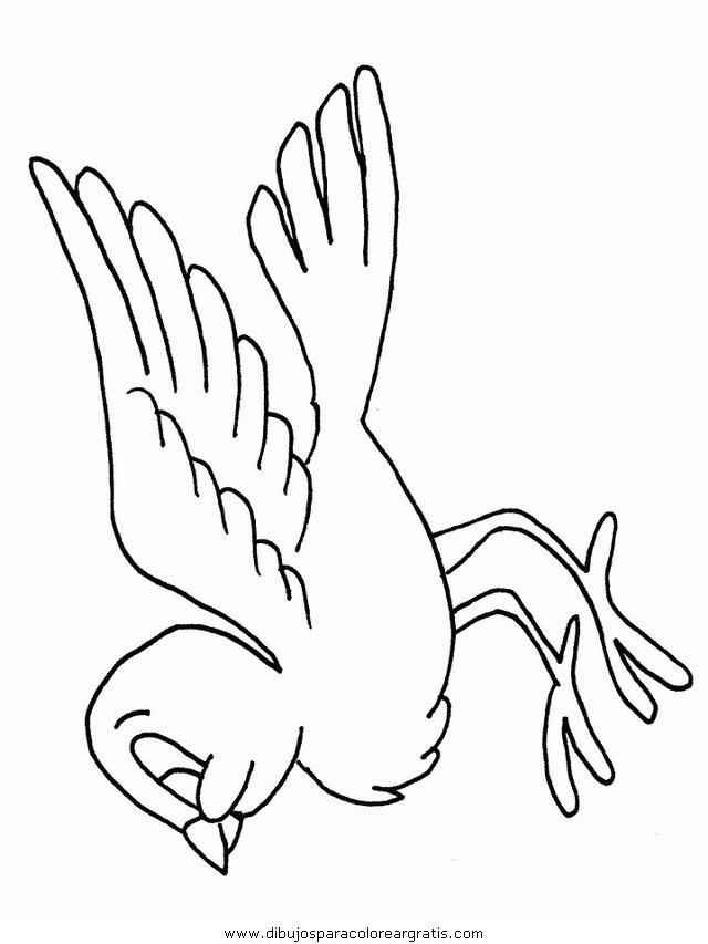 animales/pajaros/uccelli_03.JPG