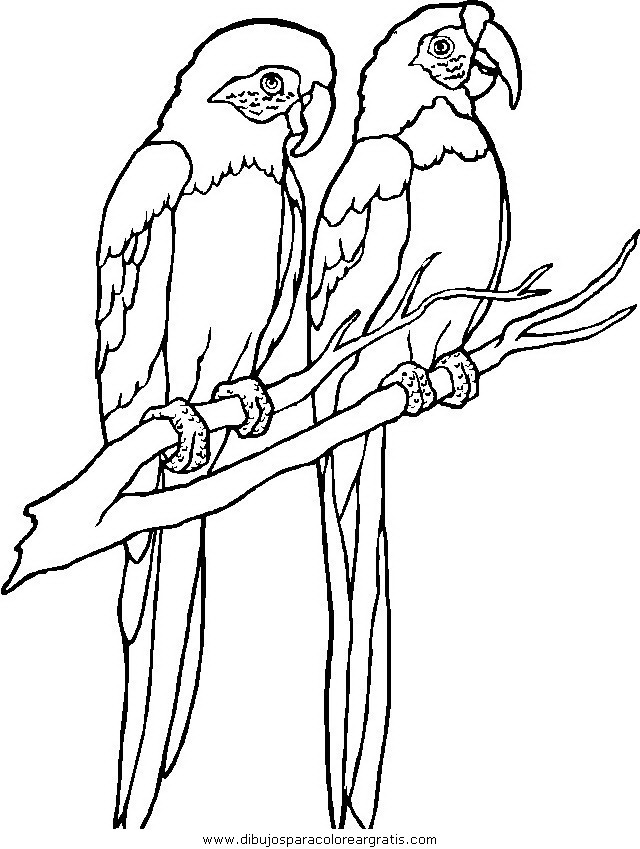 animales/pajaros/uccelli_031.JPG