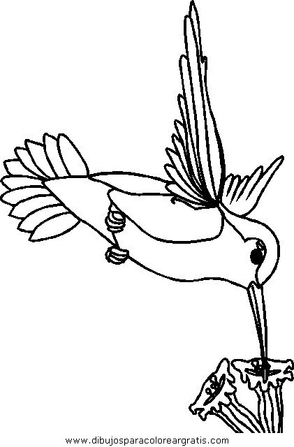 animales/pajaros/uccelli_033.JPG