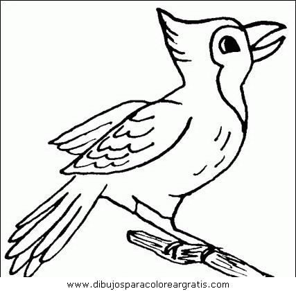 animales/pajaros/uccelli_039.JPG