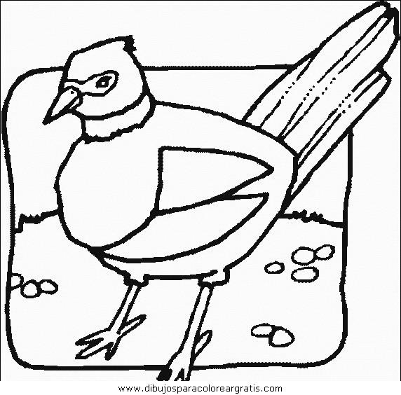 animales/pajaros/uccelli_060.JPG