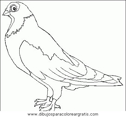 animales/pajaros/uccelli_075.JPG