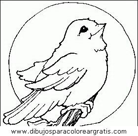 animales/pajaros/uccelli_078.JPG