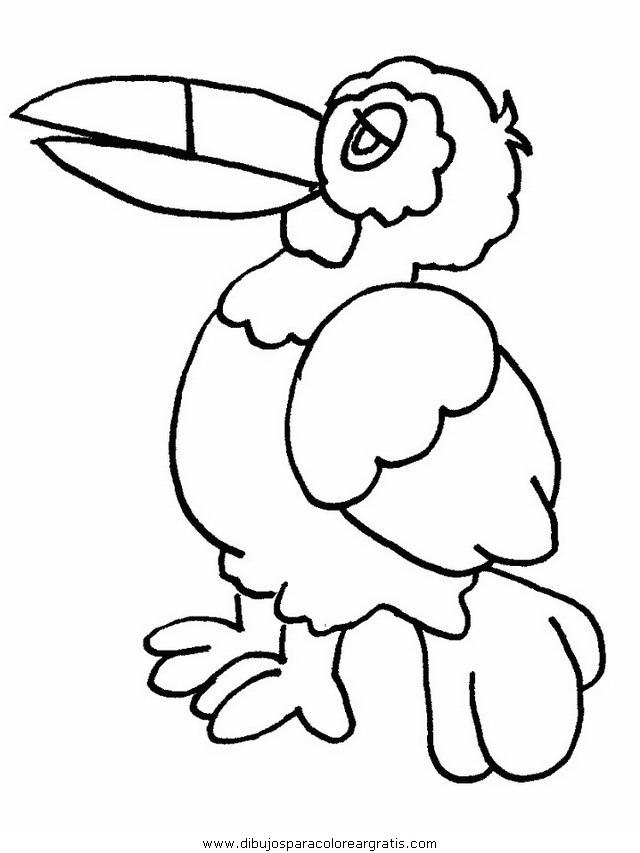 animales/pajaros/uccelli_08.JPG