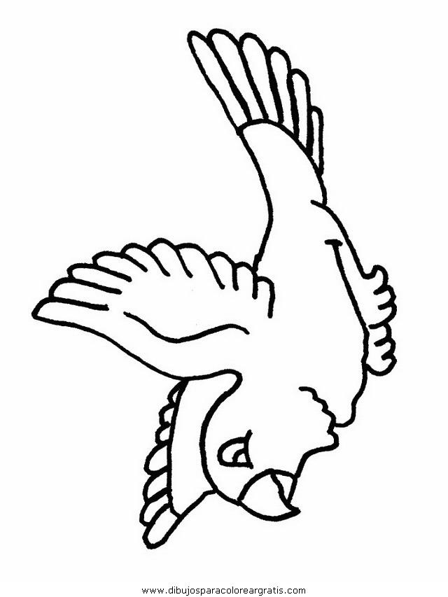 animales/pajaros/uccelli_09.JPG