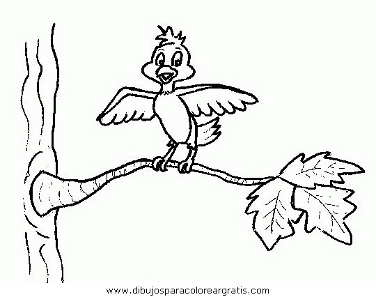 animales/pajaros/uccelli_095.JPG