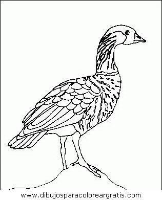 animales/pajaros/uccelli_119.JPG