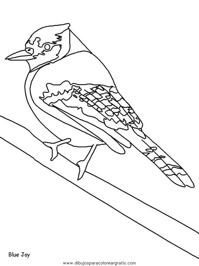 animales/pajaros/uccelli_12.JPG