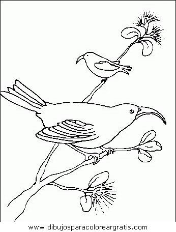 animales/pajaros/uccelli_120.JPG