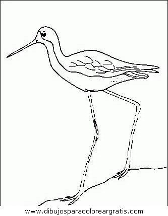 animales/pajaros/uccelli_121.JPG