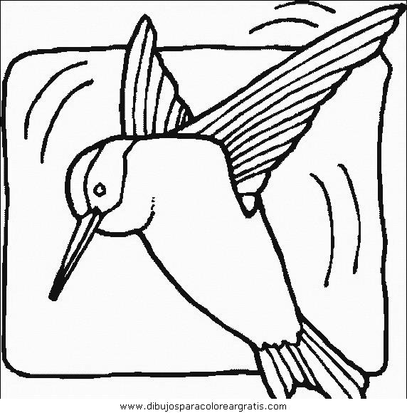animales/pajaros/uccelli_127.JPG
