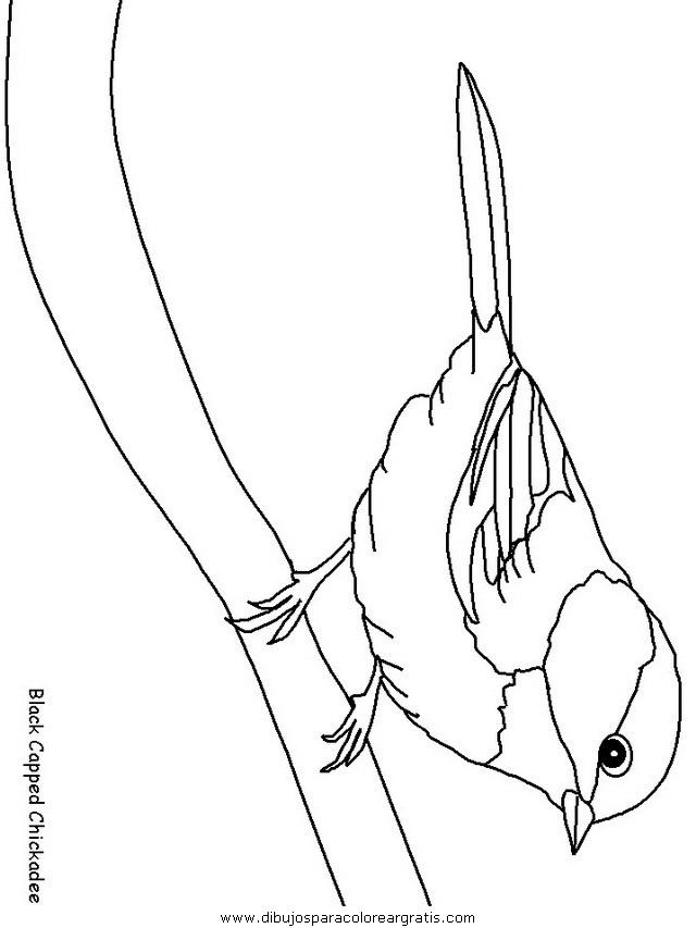 animales/pajaros/uccelli_13.JPG