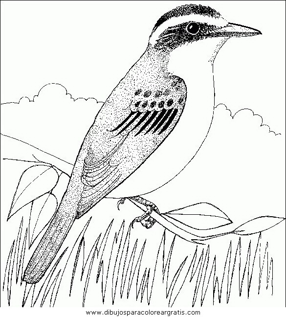 animales/pajaros/uccelli_133.JPG
