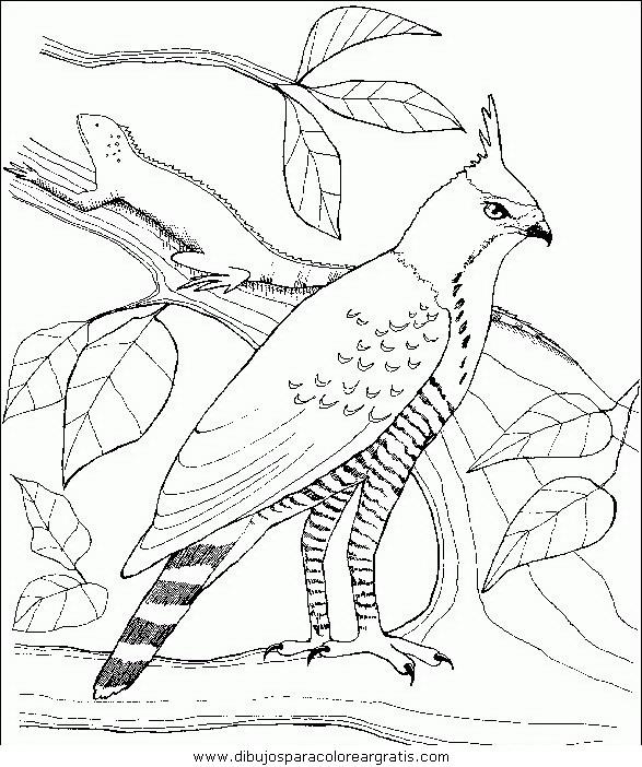 animales/pajaros/uccelli_138.JPG