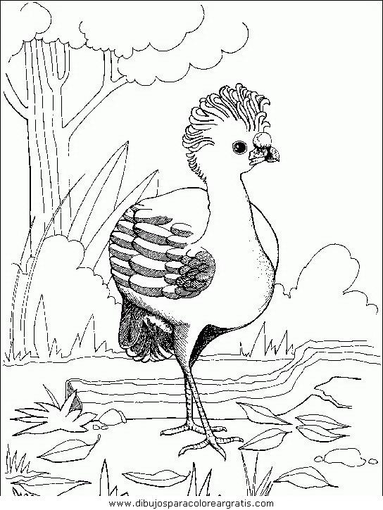 animales/pajaros/uccelli_139.JPG
