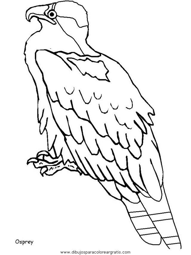 animales/pajaros/uccelli_14.JPG