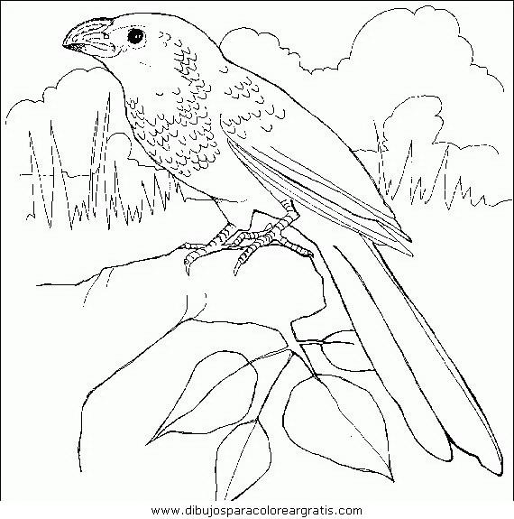 animales/pajaros/uccelli_141.JPG