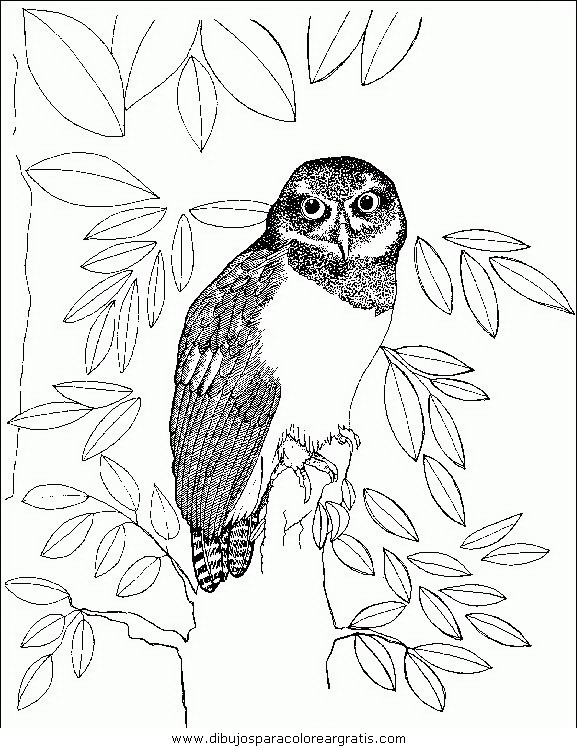animales/pajaros/uccelli_142.JPG
