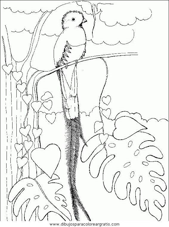 animales/pajaros/uccelli_143.JPG