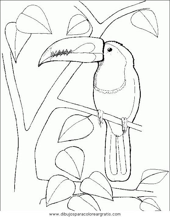 animales/pajaros/uccelli_144.JPG