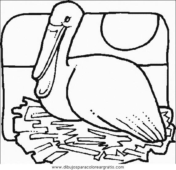 animales/pajaros/uccelli_150.JPG