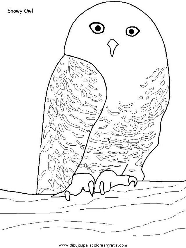 animales/pajaros/uccelli_16.JPG