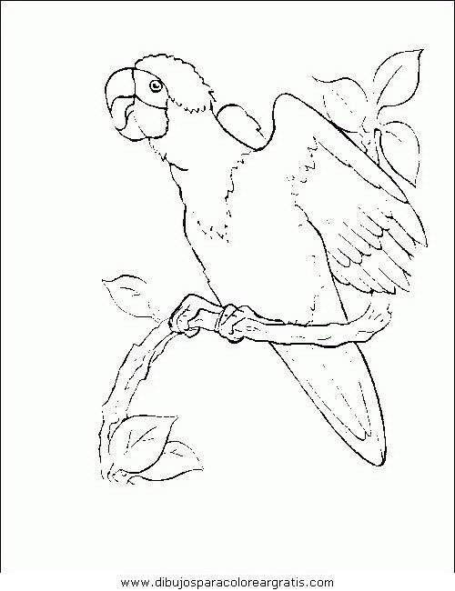 animales/pajaros/uccelli_172.JPG