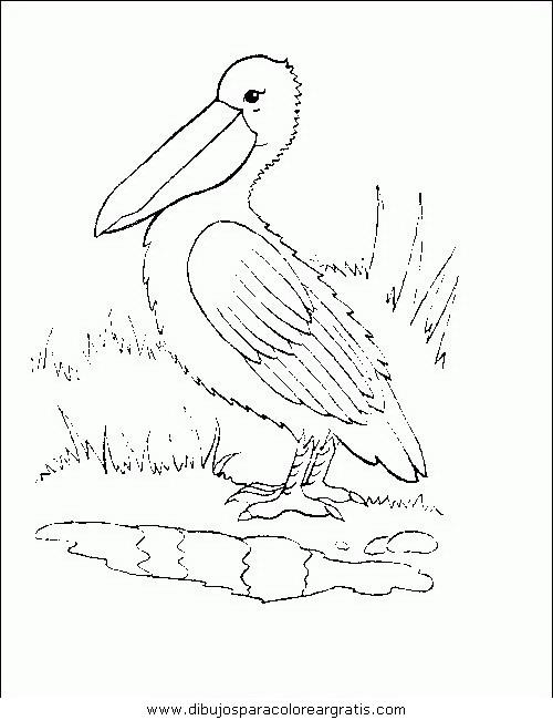animales/pajaros/uccelli_173.JPG