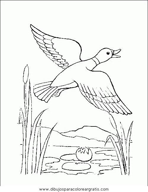 animales/pajaros/uccelli_174.JPG