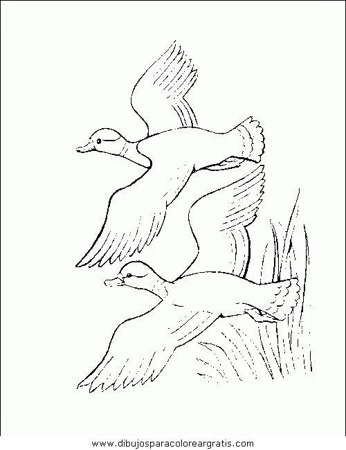 animales/pajaros/uccelli_177.JPG
