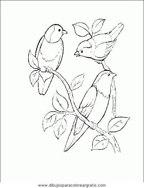 animales/pajaros/uccelli_178.JPG