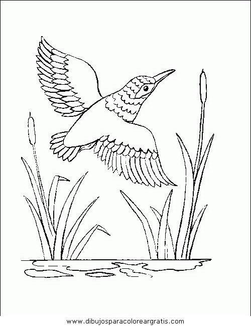 animales/pajaros/uccelli_179.JPG