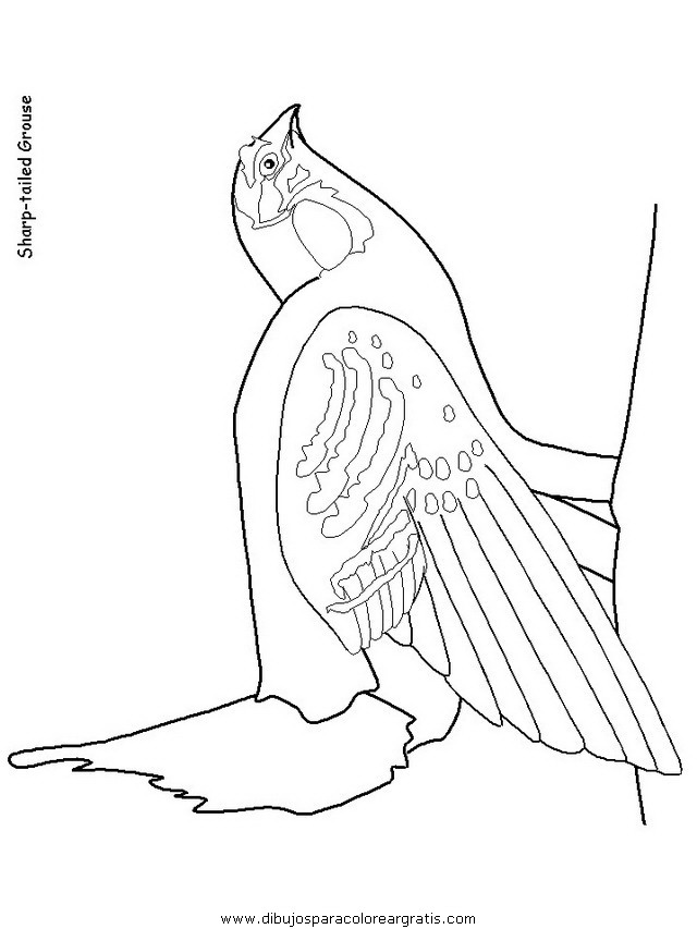 animales/pajaros/uccelli_18.JPG