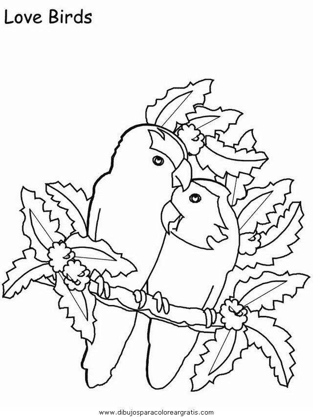 animales/pajaros/uccelli_21.JPG