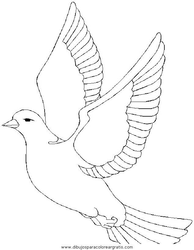 animales/pajaros/uccelli_235.JPG