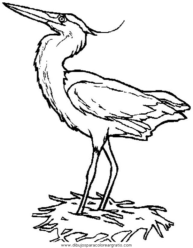 animales/pajaros/uccelli_238.JPG