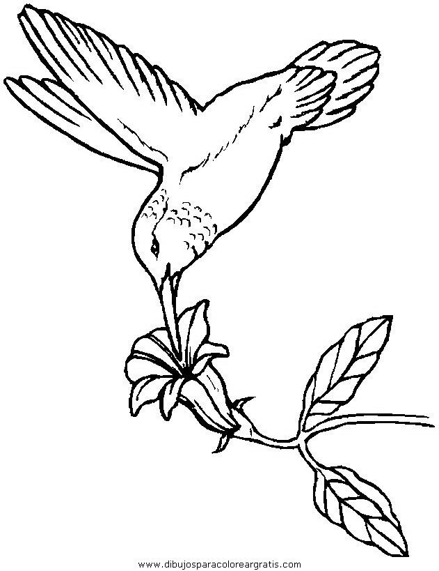 animales/pajaros/uccelli_239.JPG