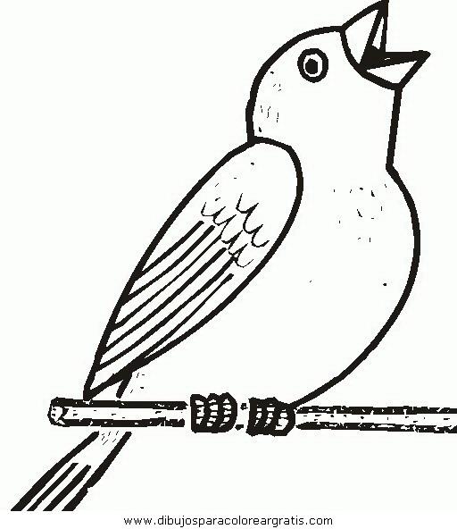 animales/pajaros/uccelli_243.JPG