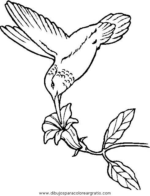 animales/pajaros/uccelli_259.JPG