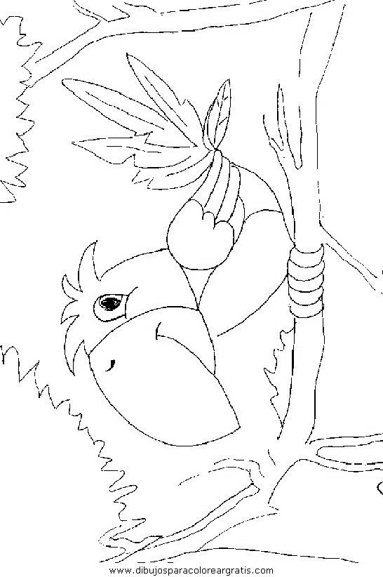 animales/pajaros/uccelli_272.JPG