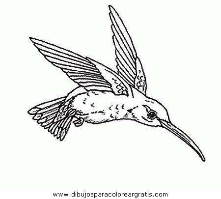 animales/pajaros/uccelli_279.JPG